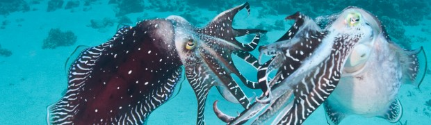 Cuttlefish Confrontation - Photo 1