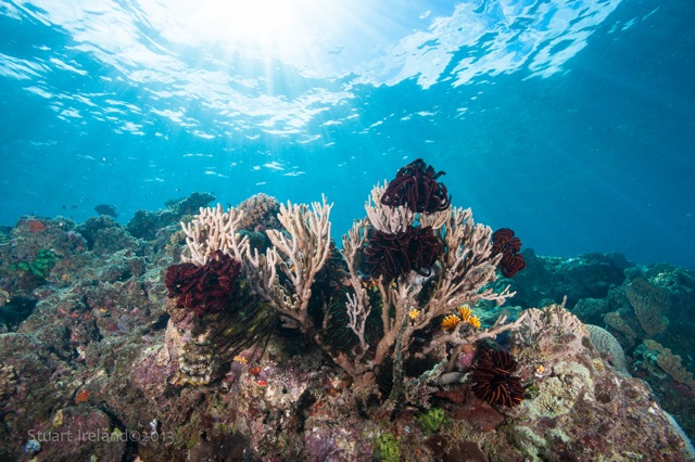 Great diving on Great Barrier Reef