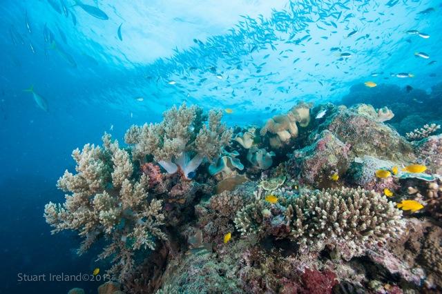 Abundant Fish at Moore Reef