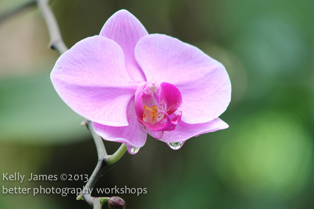 Photography course Cairns May 2013-