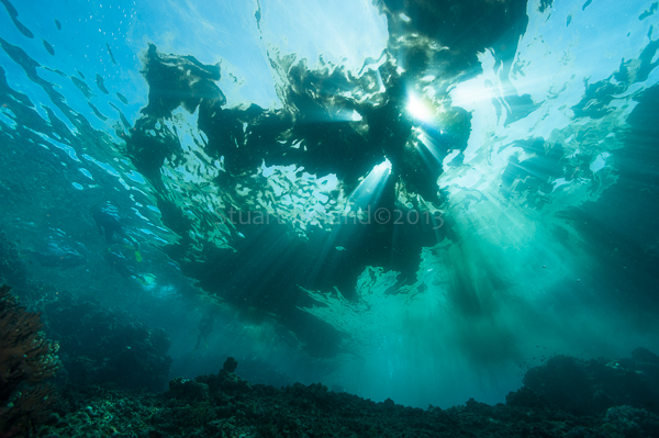 Reef or Sea sawdust